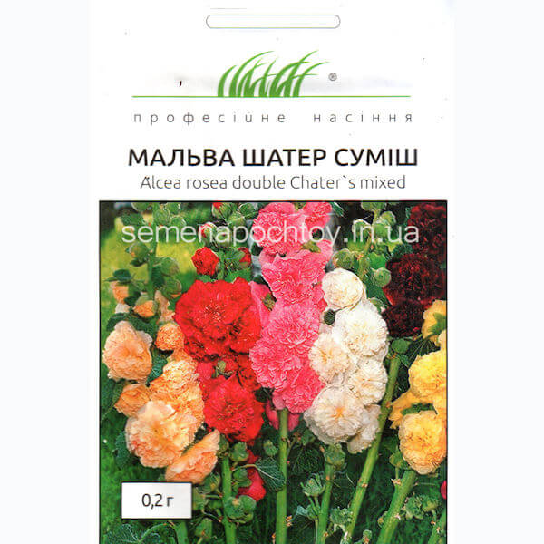 Мальва ШАТЕР