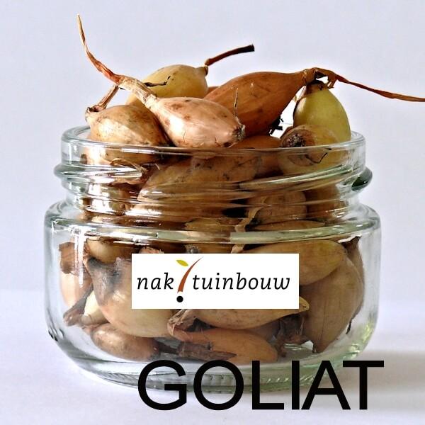Лук GOLIAT