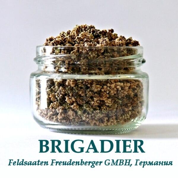 Свекла Бригадир