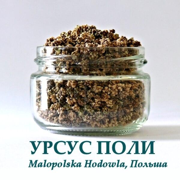 Свекла УРСУС ПОЛИ